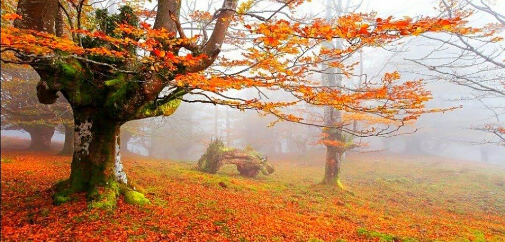 cuadros de otoño