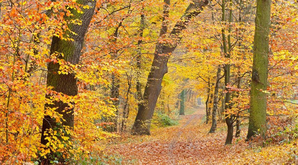 cuadros de otoño para decoración